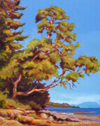 Hummingbird Beach Arbutus